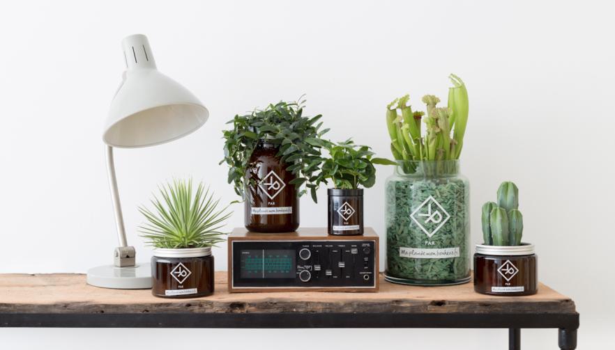 comment d corer son int rieur avec des plantes trucs de. Black Bedroom Furniture Sets. Home Design Ideas