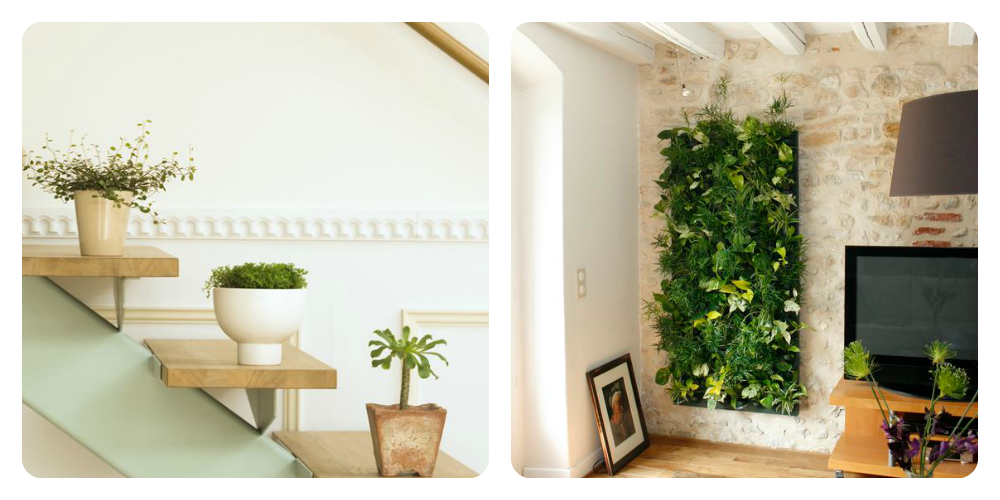 Comment d corer son int rieur avec des plantes trucs de for Decorer un mur de salon