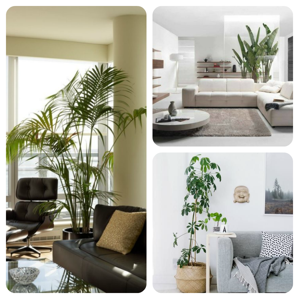 comment d corer son int rieur avec des plantes trucs de nana. Black Bedroom Furniture Sets. Home Design Ideas