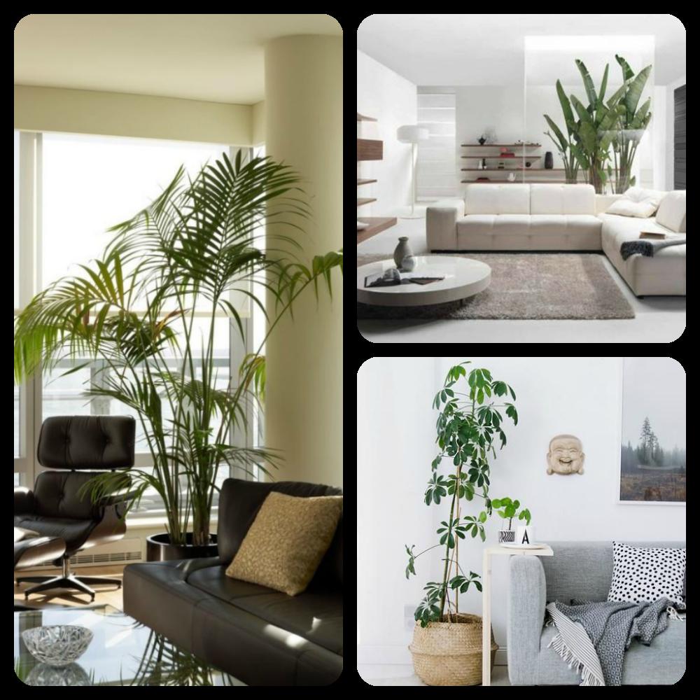 Etagere Pour Plantes Interieures comment décorer son intérieur avec des plantes? - trucs de nana